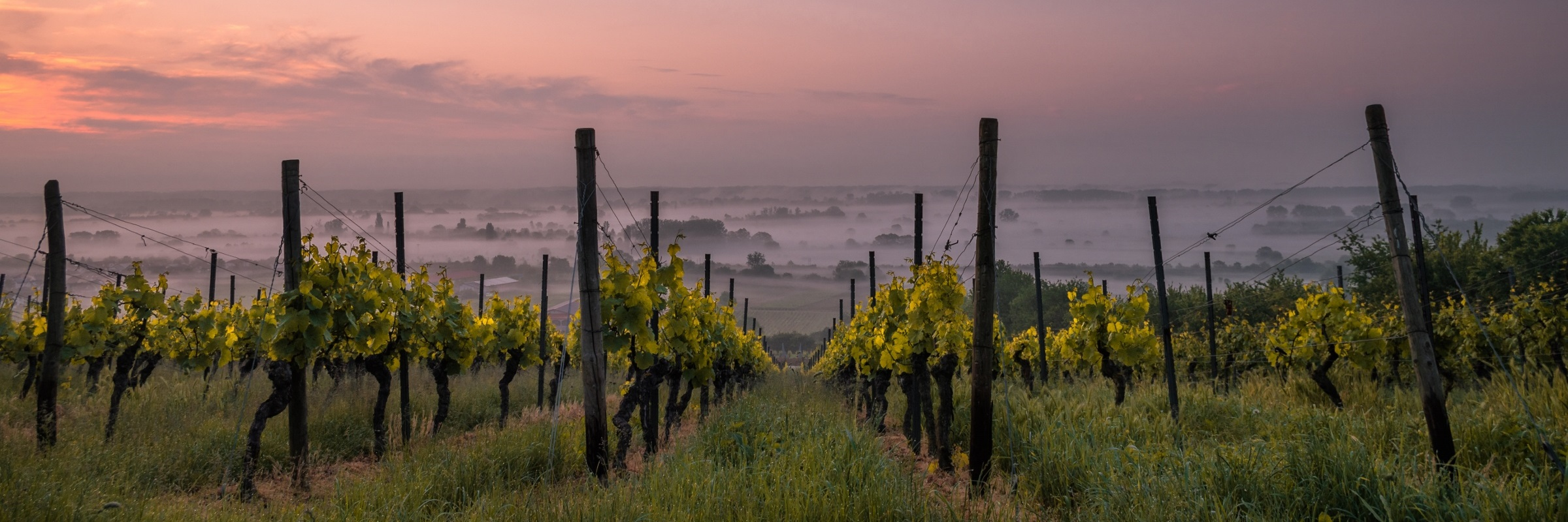 Vinyard Sunset (2400×800)
