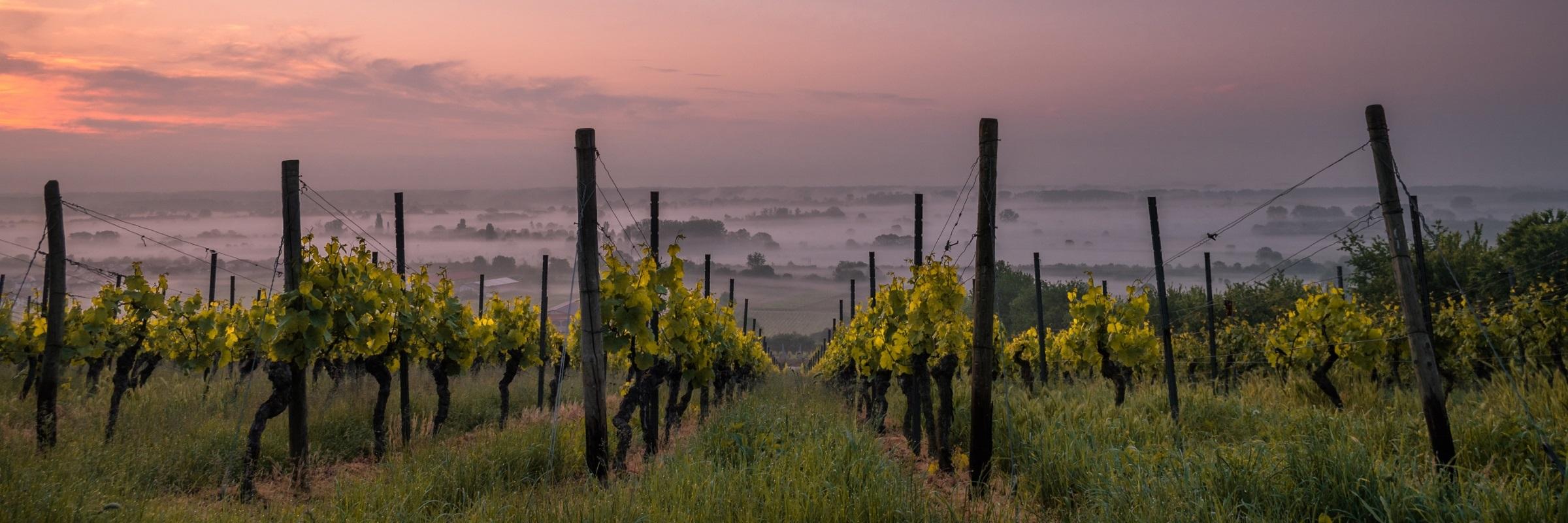 Vinyard Sunset (2400×800)